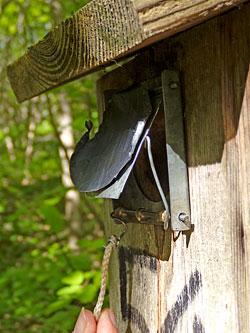 En obstruant la porte du nichoir des mésanges par un dispositif pouvant être ouvert en tirant sur une ficelle, les chercheuses ont pu calculer le temps pris par les parents pour découvrir la solution.